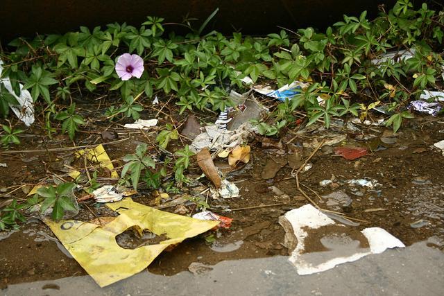 Flor e lixo web